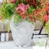 Vaso Anemones Lalique